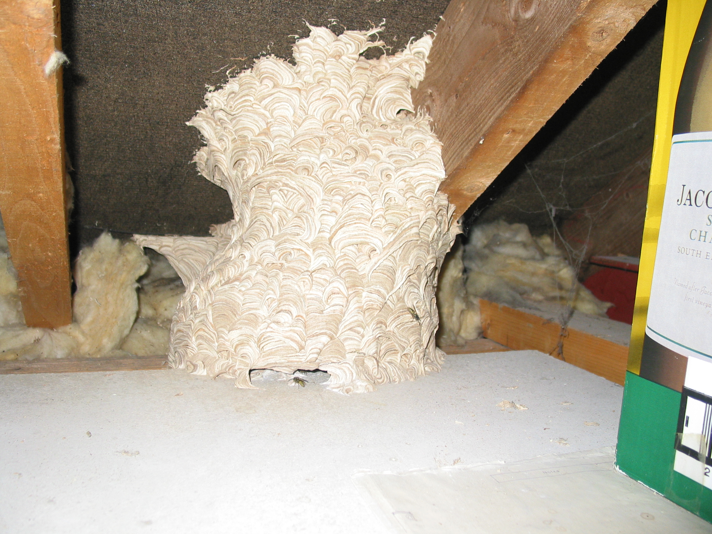 Wasp Nest East Sussex